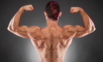 徒手重量訓練動作—背部