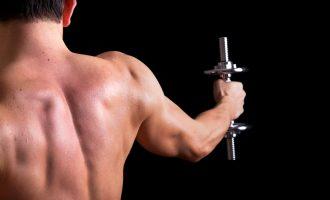 啞鈴重量訓練—背部