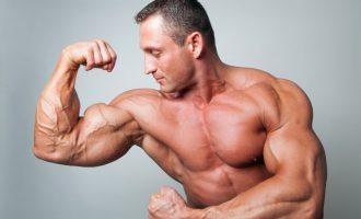 4個與肌肉生長相關的賀爾蒙