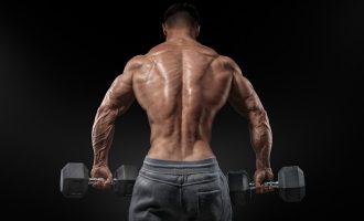 背肌初養成 兼顧寬大與雄厚